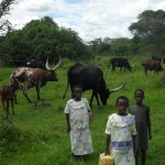 Children carrying water among the cows