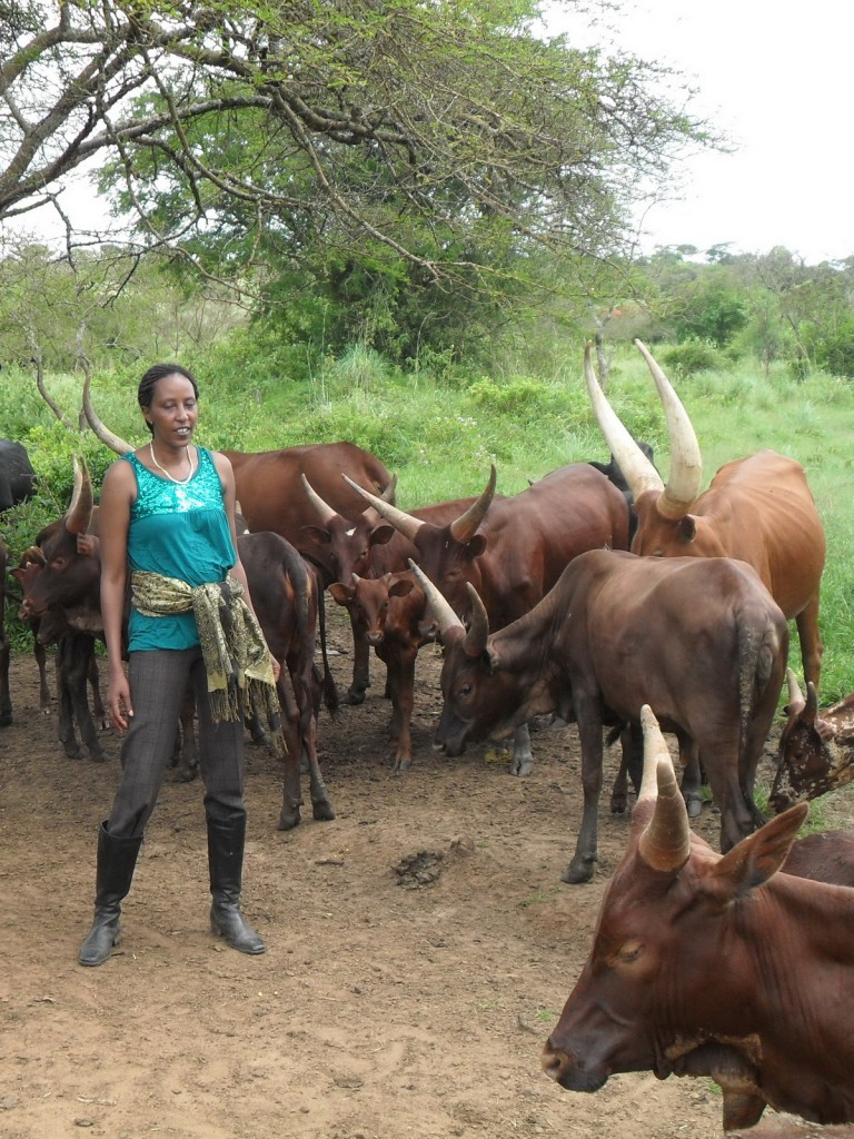 Winfred with the cows